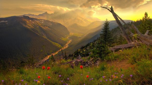 7201_landscape